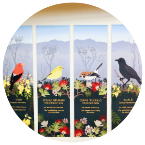 Honeycreepers Post Featured